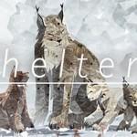 shelter-2-banner